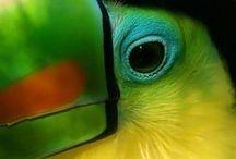 ✕ Amazonia ✕