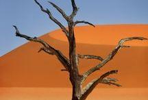 ✕ Namib Desert ✕