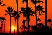 ✕ California Dreamin' ✕