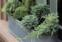 Fiori / Greenery for small outdoor spaces