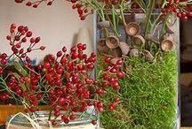Piante da interno / Plants for interior decoration