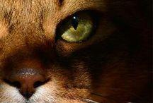 коти: пухнастi любчики