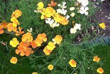 My Garden / In Newcastle between 2007 and 2014