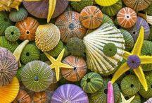 Sun, Sea & Pebbles