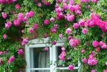 Flower Love / Various Beautiful Flowers or Shrubs / by A Cultivated Nest