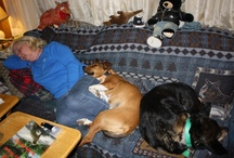 Our Four-legged Children / We have had some wonderful four-legged kids and I want to introduce them to you.