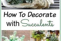 Succulents / Succulents