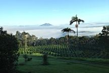 Lime Caviar Country / This is where our Finger Limes are grown.