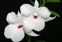 Orchids / by Doris