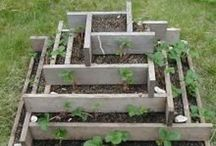 Gardening: Planters / Planter, Green Houses and other tips to efficiently grow your garden