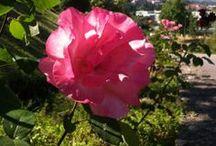 As nossas flores