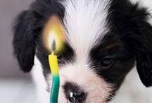 Frugal Pets / DIY pet ideas, DIY pet food, DIY pet treats, DIY pet beds, DIY pet toys, DIY pet crafts, DIY pet clothes, DIY pet remedies, DIY pet gifts