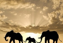Most Magical Creatures / Elephants hold a special place in my heart for their strength, wisdom and community spirit
