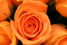 For the LOVE of ORANGE!! / by Barbara Hainsworth