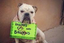 Waylon el perro / by Kathy DeBoy