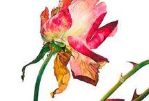 specimens & botanicals / by Naomi Bardoff