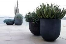 LANDSCAPING_POTS & CONTAINERS / by Alexsandra Dotto