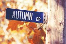 Fall Favorites / by Julie K