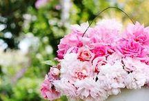 In My Garden / by Julie K