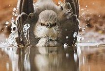 ALL GOD'S WONDERFUL CREATURES - 2 / Animals, Birds all God's creatures