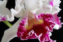 FLOWERS, GARDENS & LANDSCAPES - 2 / Flowers, gardens & landscapes