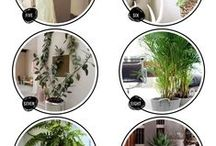 Holistic Home / Sustainable, green, holistic living.
