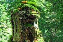 Garden, Plants & Biotope