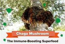 Chaga / A collection of interesting Chaga resources, mostly highlighting its many medicinal benefits. Click follow to learn more about the King of Medicinal Mushrooms.   This is a group board with Chaga Mushroom pins only. If you want to join, simply ask using one of our recent pins. Thanks and happy pinning!