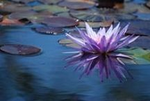 Nature ~ Flora
