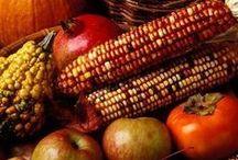 autumn / autumn - automne - red color - Halloween