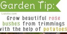 gardening / diy's, tips and useful tricks to help you and your garden get better