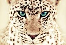 Wild Animals / by Jessica Fredricks