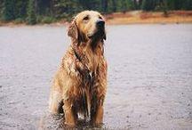 Dogs / by Jessica Fredricks