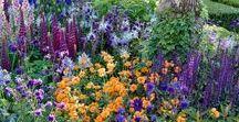 flowers & garden design