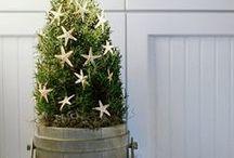 Cyprès / Le cyprès est un arbre élancé, pyramidal, très ancien, d'une cinquantaine de mètres de hauteur et d'une longévité exceptionnelle, jusqu'à 2000 ans. Son écorce est ris rougeâtre, fissurée. Les feuilles ne sont pas des aiguilles mais des écailles triangulaires. L'huile essentielle de cyprès des feuilles à l'état frais, après la taille d'automne. (M.Faucon)
