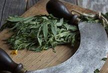 Estragon / Originaire d'Europe, l'estragon est une plante herbacée vivace possédant un parfum connu et très utilisé pour aromatiser les vinaigrettes. Elle forme un buisson de petite taille aux tiges ligneuses et ramifiées. (M.Faucon)