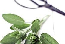 Sauge sclarée / La sauge sclarée est une plante de soleil, qui croît sur les collines arides et calcaires, et dont l'odeur est douce. Elle est vivace par sa souche pivotante, elle ne dépasse pas un mètre de hauteur à l'état sauvage. (M.Faucon)