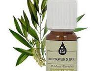 Tea tree / Le ta-tree aime les sols humides ou marécageux des régions tropicales, plutôt en plaine. La distillation, en vue de l'obtention de l'huile essentielle, s'effectue sur les feuilles fraîches. Une forte odeur se dégage, dès que l'on froisse les feuilles. (M.Faucon)