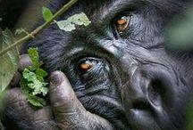 Animal Planet...!