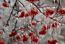 Nice Winter Stuff / Snow sparkle and cosyness