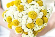 Daisies / Yellow / Yellow inspirational weddings