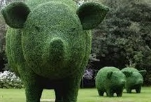 Pig Extravaganza