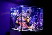 AQ / Aquariums