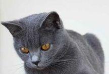 les chats de luxe ont la vie dure / savoir se mettre en danger