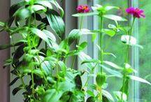 Grüne Geschenke / Urban Gardening zum Verschenken. Schau rein - hier gibt's Green Gifts für Groß und Klein.