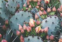 Pretty Things / random pretty things | pretty photos + inspiration