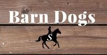 Barn Dogs / Every barn needs a good dog. Follow me and check out savvyhorsewoman.com for more!