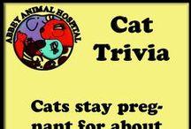 Cat Trivia / Cat Trivia