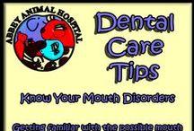 Dental Care Tips / Dental Care Tips