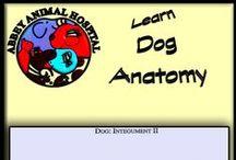Dog Anatomy / Dog Anatomy